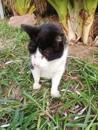 Our resident pet a cat, Umhlanga Promenade.